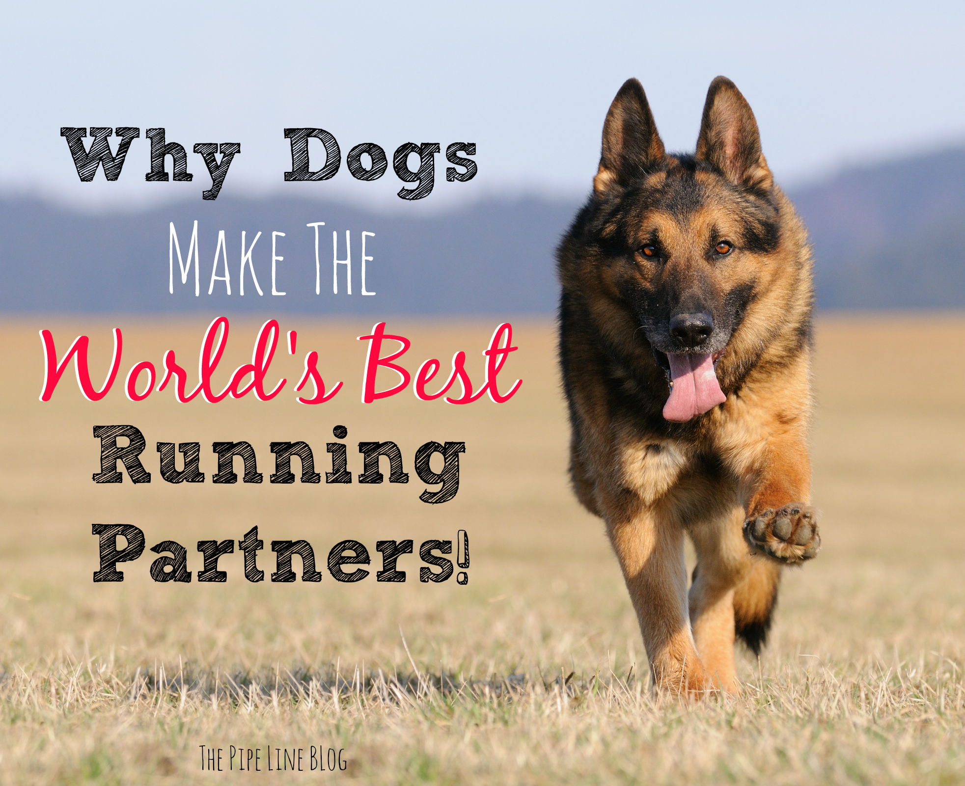 Piping Rock - The Pipe Line - Why Dogs Make the World's Best Running Partners