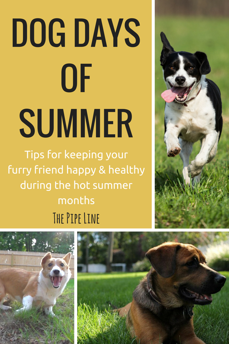 Dog Days on July, 2019: why do we call August the dog days of summer?
