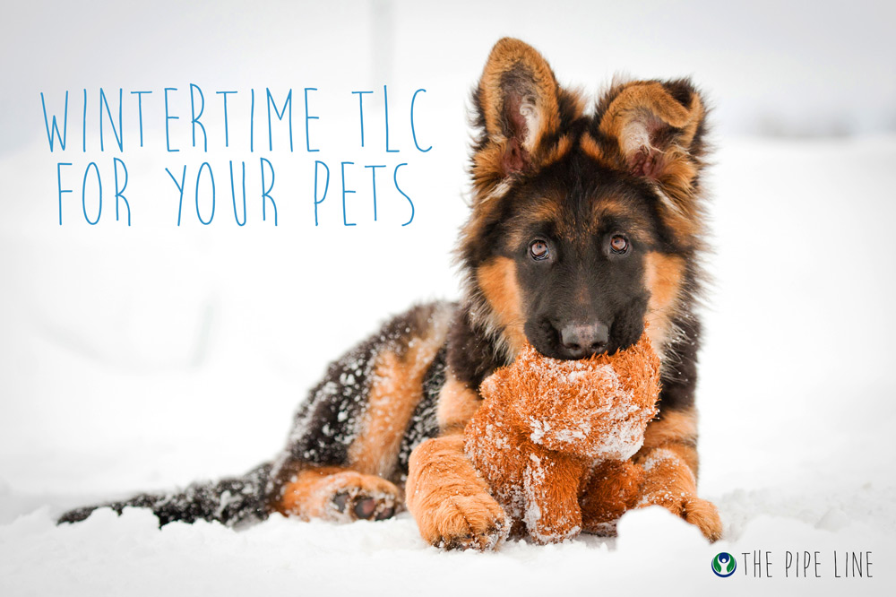 Piping Rock - The Pipe Line - Wintertime TLC For Your Pets - Tips for Keeping Your Pets Healthy in Winter