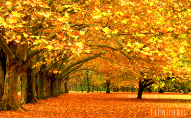 Piping Rock - The Pipe Line - Scents of the Season Autumn Aromatherapy Blends