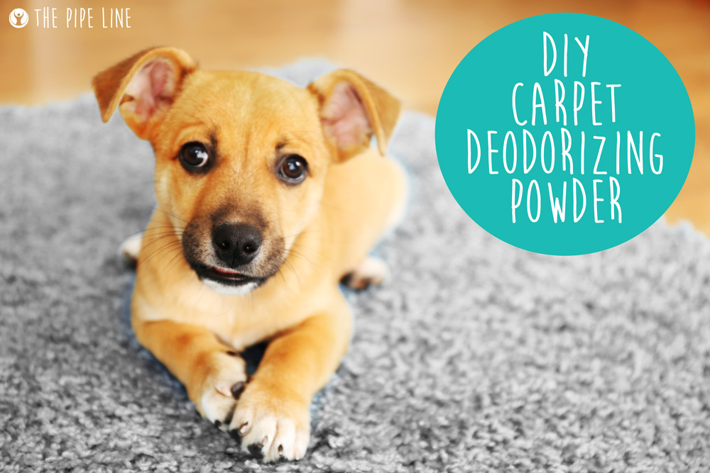 DIY CARPET DEODORIZING POWDER.