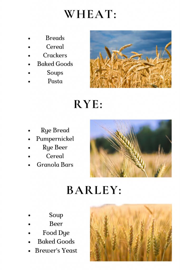 Grains of Gluten