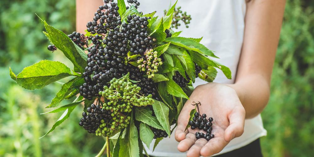 Woman holding Elderberries